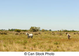 Camargue Clip Art and Stock Illustrations. 13 Camargue EPS.