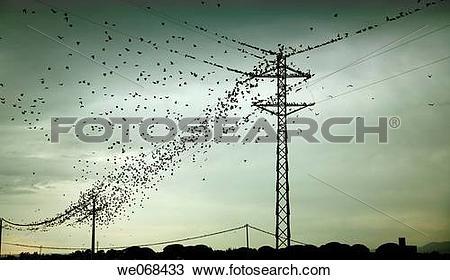 Stock Photo of Birds on pylons. Cambrils, Tarragona province.