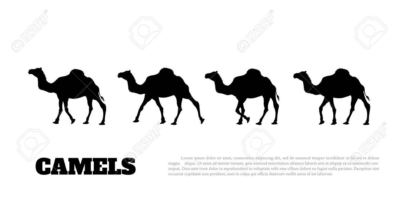 Detailed black silhouette of camel caravan on white background.