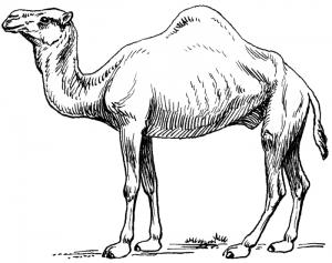 Camel Clip Art Download.