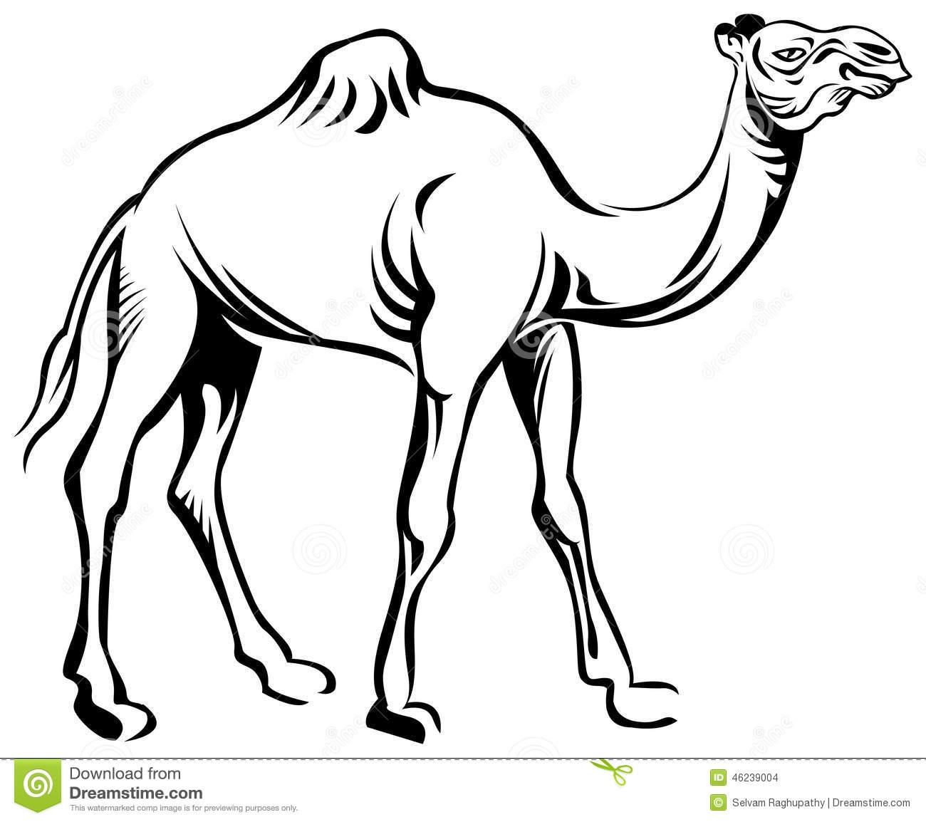 Camel stock vector. Illustration of livestock, black.