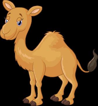 Cartoon Camel.