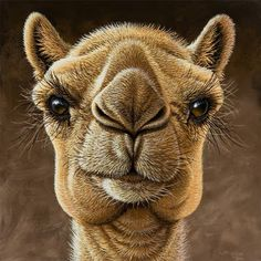 artists drawings of camels.