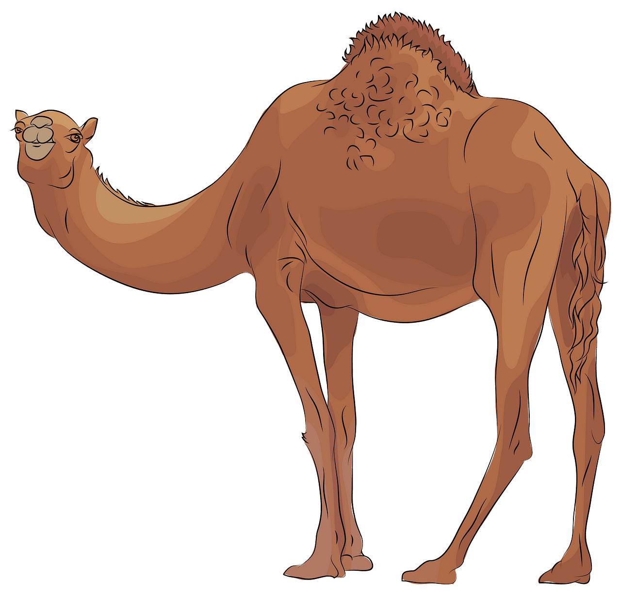 Camel clipart. Free download..