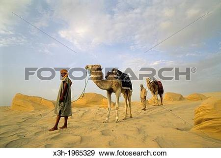 Stock Photograph of camel driver and dromadary in Lareguett dunes.