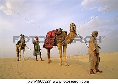 Picture of camel driver and dromadary in Lareguett dunes around.