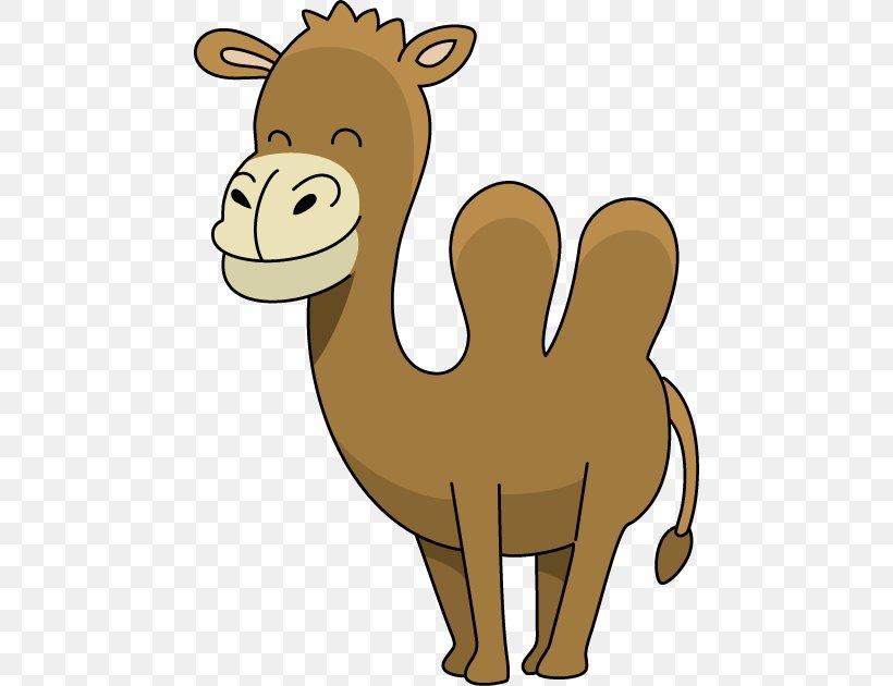 Dromedary Camel Face Cartoon Clip Art, PNG, 464x630px.