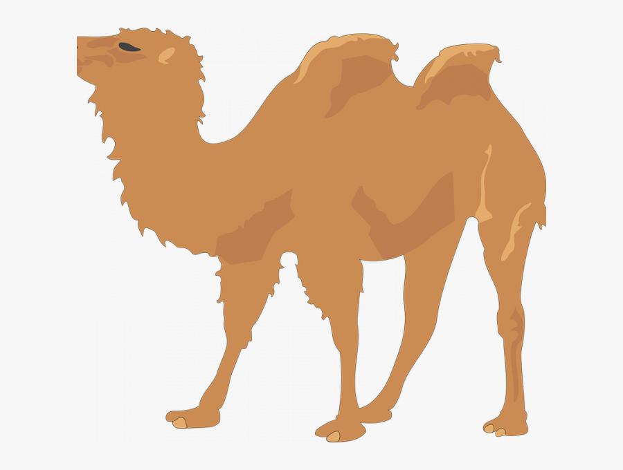 Transparent Camel Face Clipart.