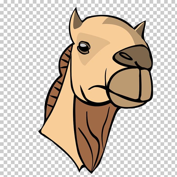 Bactrian camel Dromedary Camel Face , camel PNG clipart.