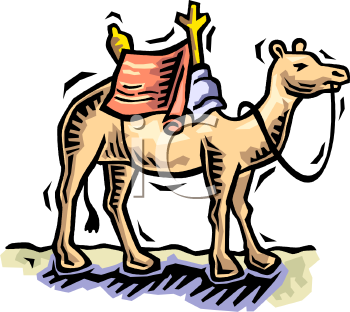 Camel with a Saddle.