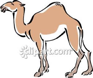 Brown Camel.