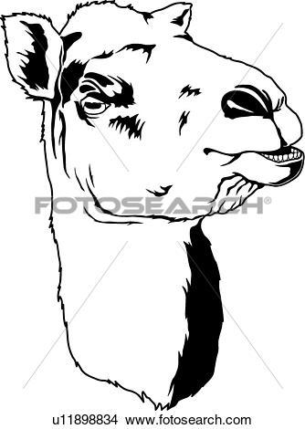 Camel Clipart and Illustration. 3,781 camel clip art vector EPS.