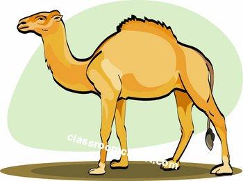 Camel Large Size Clipart.