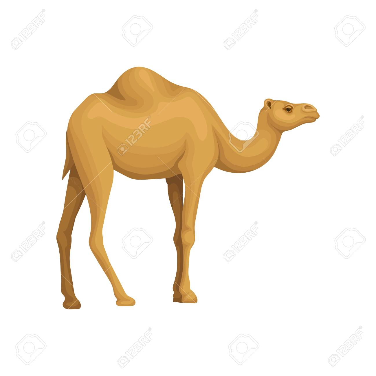 Detailed flat vector icon of Egyptian camel. Desert animal with...