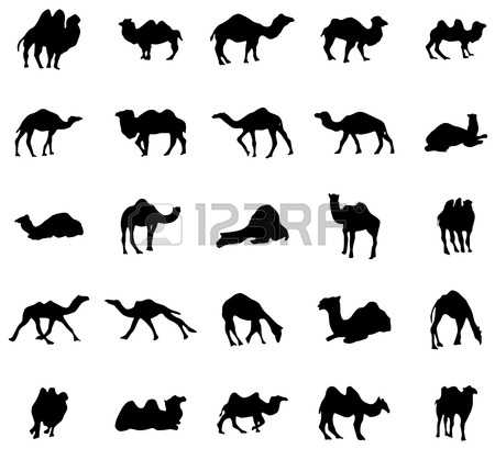 Camel Train Images & Stock Pictures. Royalty Free Camel Train.
