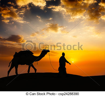 Stock Photographs of Cameleer camel driver with camels in desert.