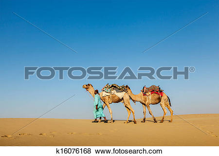 Pictures of Cameleer (camel driver) with camels in Rajasthan.