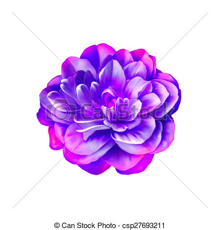 Camellia Clip Art and Stock Illustrations. 297 Camellia EPS.
