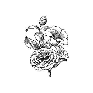 Camellia Clipart.