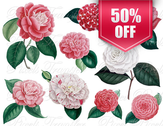 CAMELLIA COLLAGE wedding clipart white flower by PixelsTransfer.