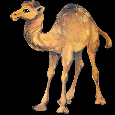 Cute Camel Clipart.