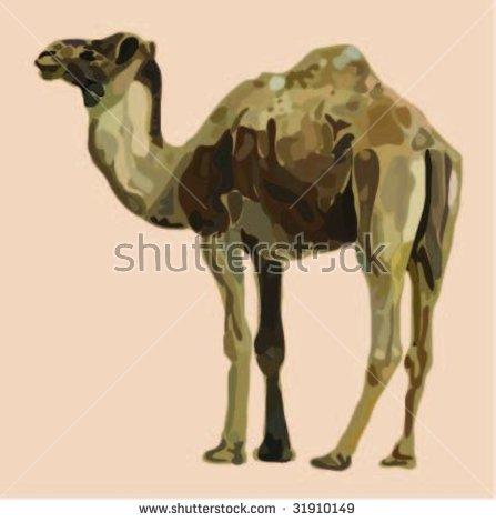 Camelidae Stock Vectors & Vector Clip Art.