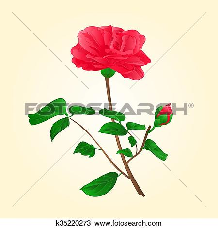 Clipart of Flower Camellia Japonica with bud vektor.eps k35220273.