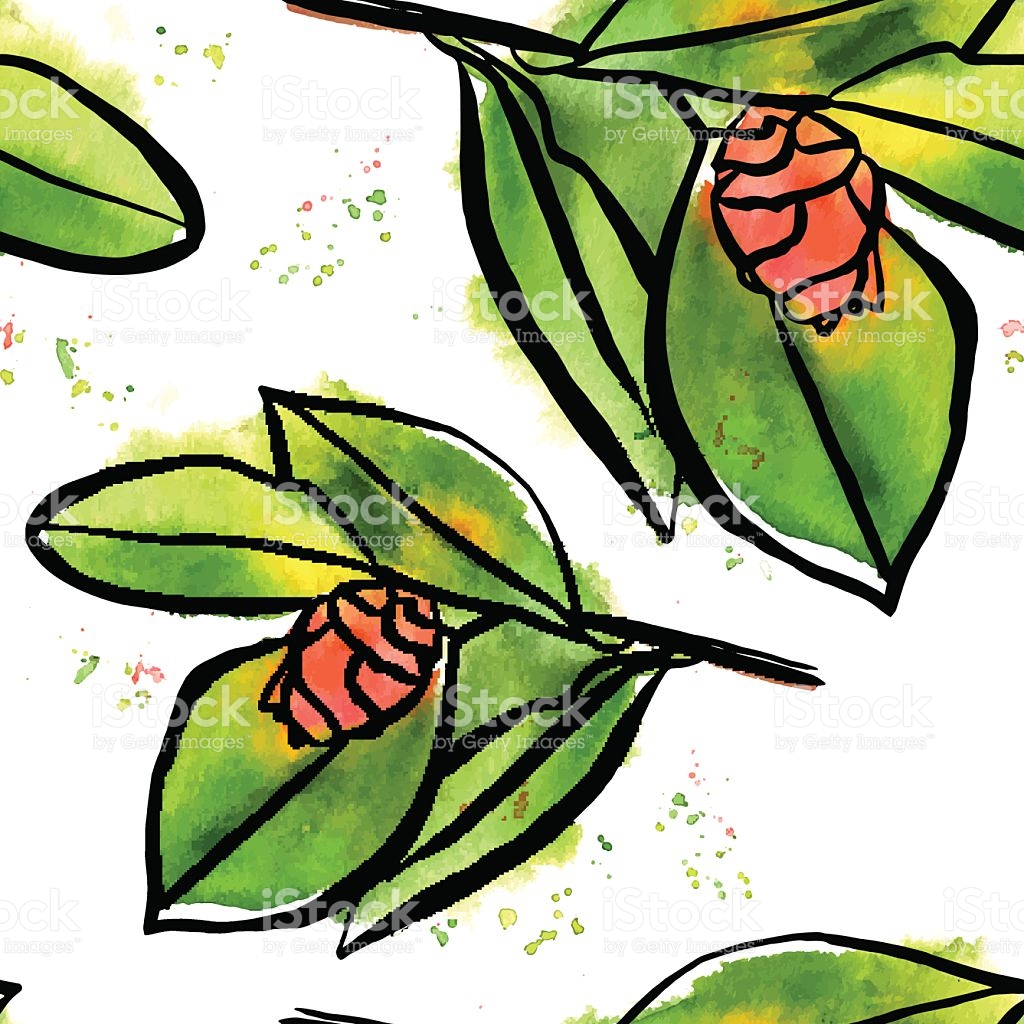 Seamless Vector Pattern With Watercolor Camellia Buds And Green.