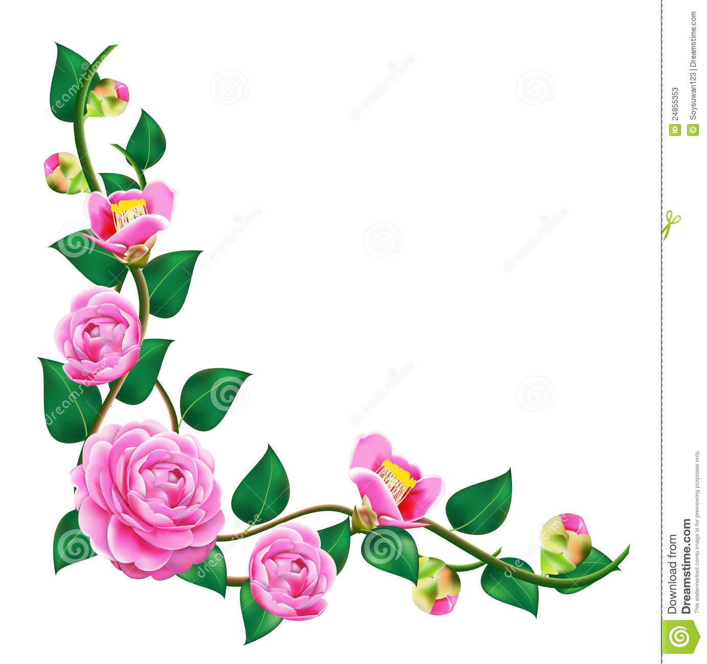 Beautiful Camellia Stock Illustrations.