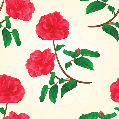Camellia Flower Clip Art, Vector Images & Illustrations.
