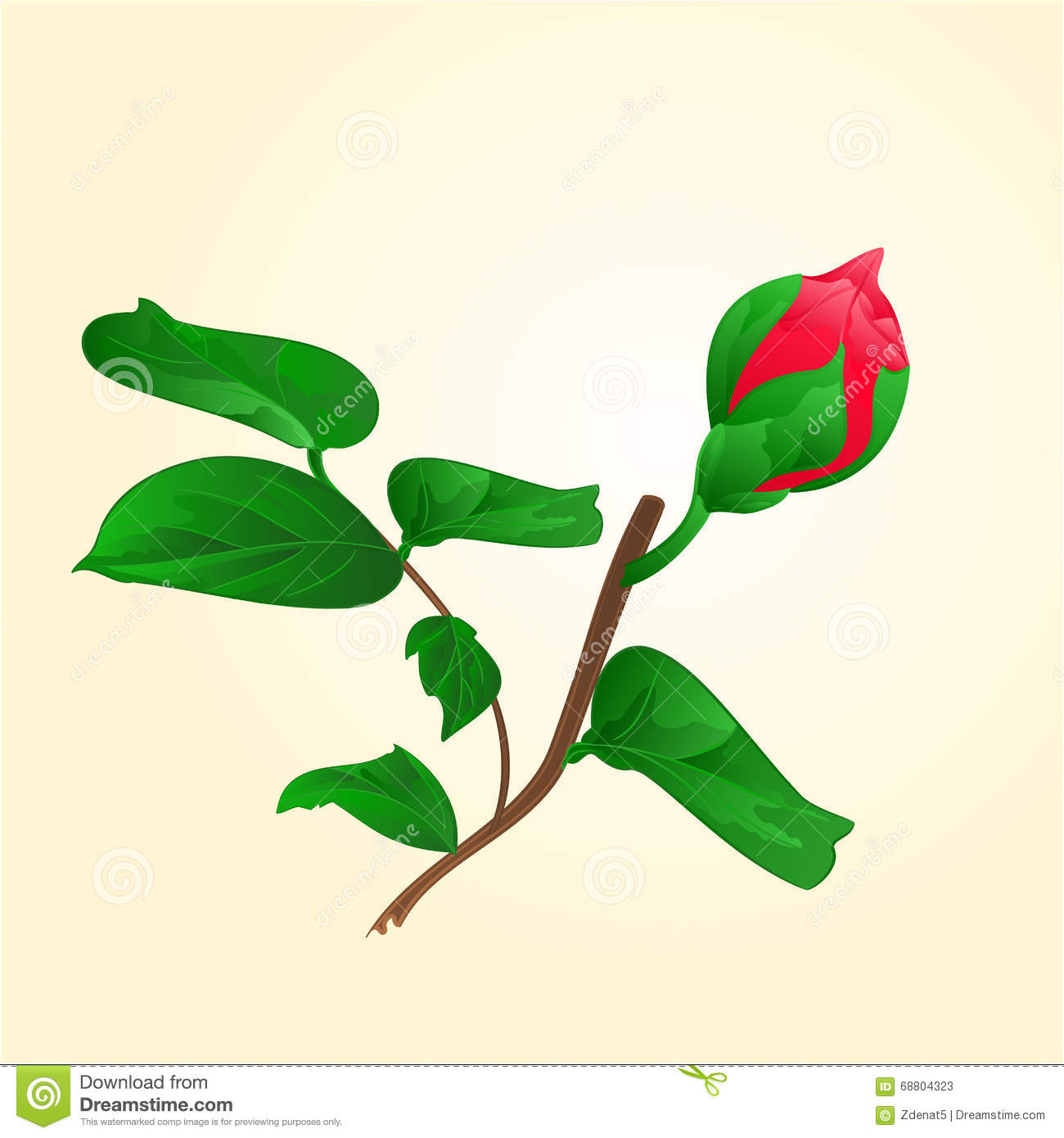 Camellia Flower Bud Stock Photos, Images, & Pictures.