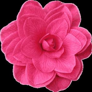 Image Gallery of Camellia Clip Art.
