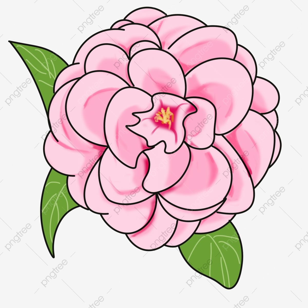 Camellia Illustration Cartoon Flower, Pink Camellia, Pink, Pink.