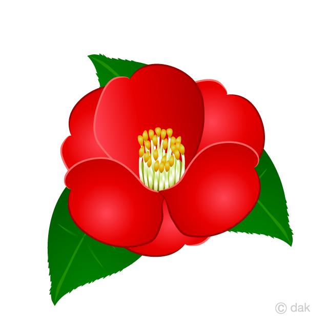 Camellia Flower Clipart Free Picture|Illustoon.