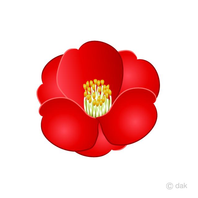 Free Camellia Flower Clipart Image Illustoon.