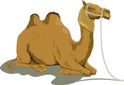 Camels clipart.