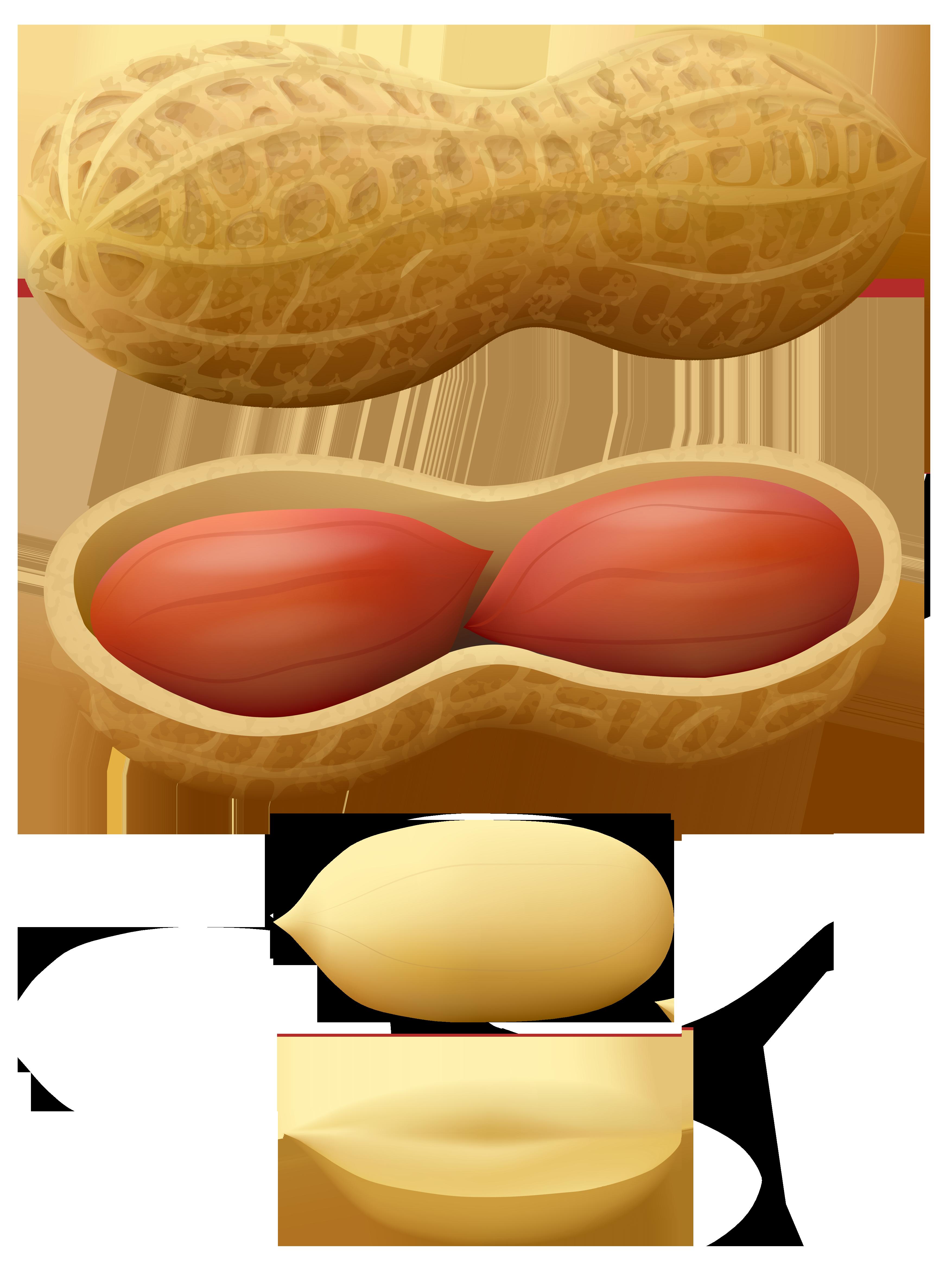 Peanuts PNG Clip Art.
