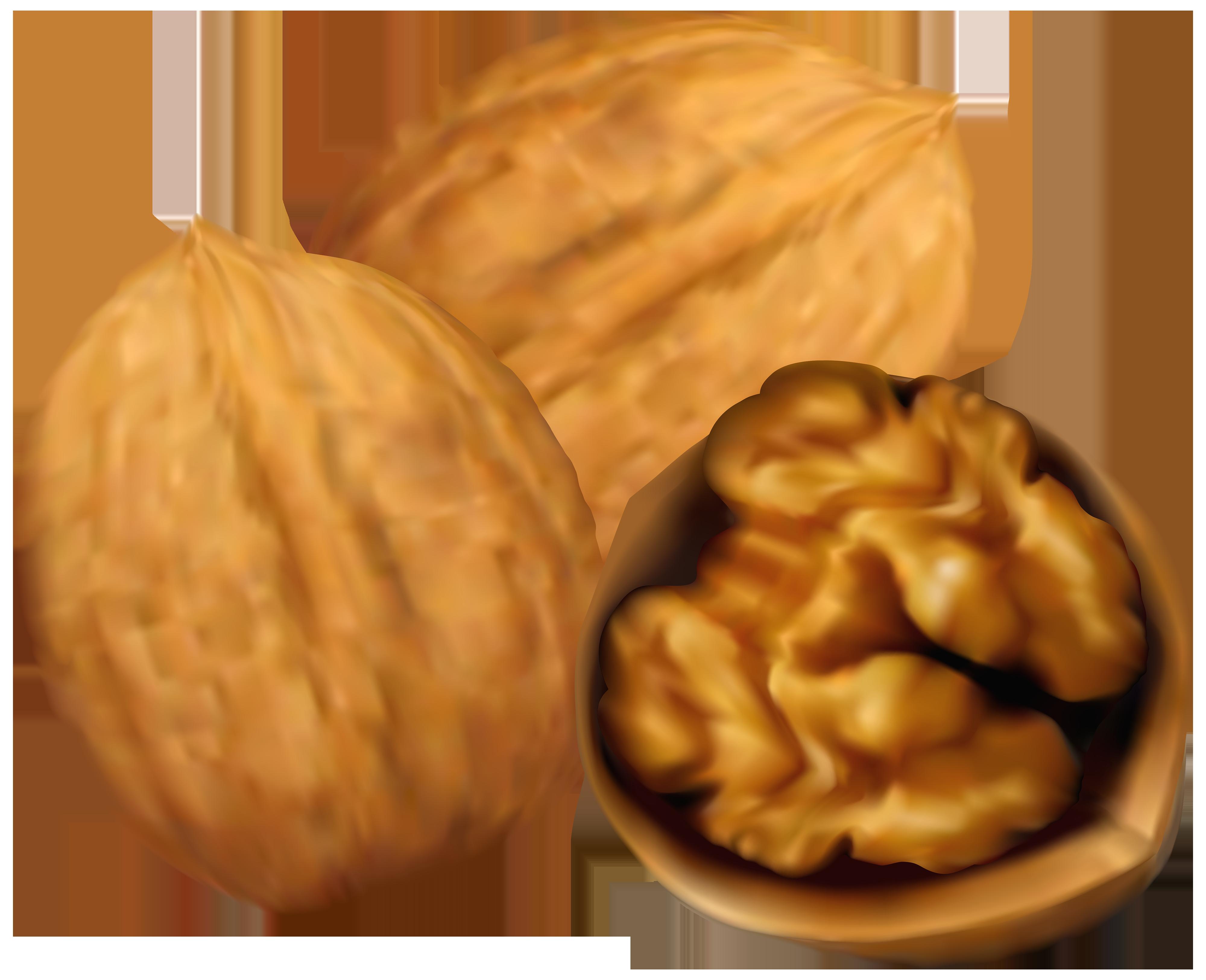 Walnuts PNG Clip Art.