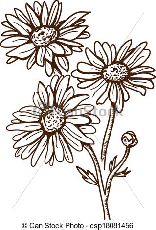 Clipart Vector of Camomile flower isolated on white..