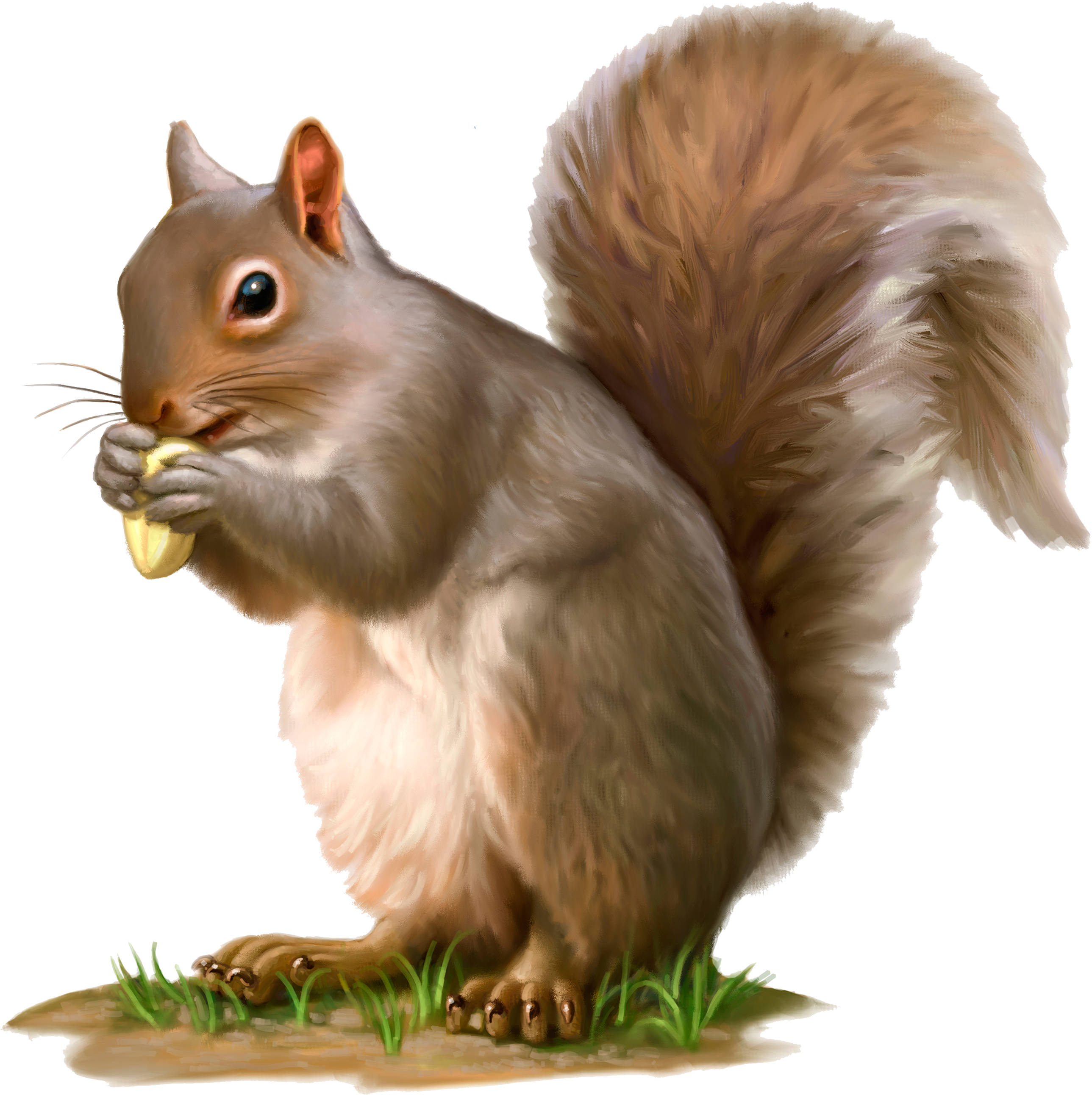 Camp Discovery Squirrel.