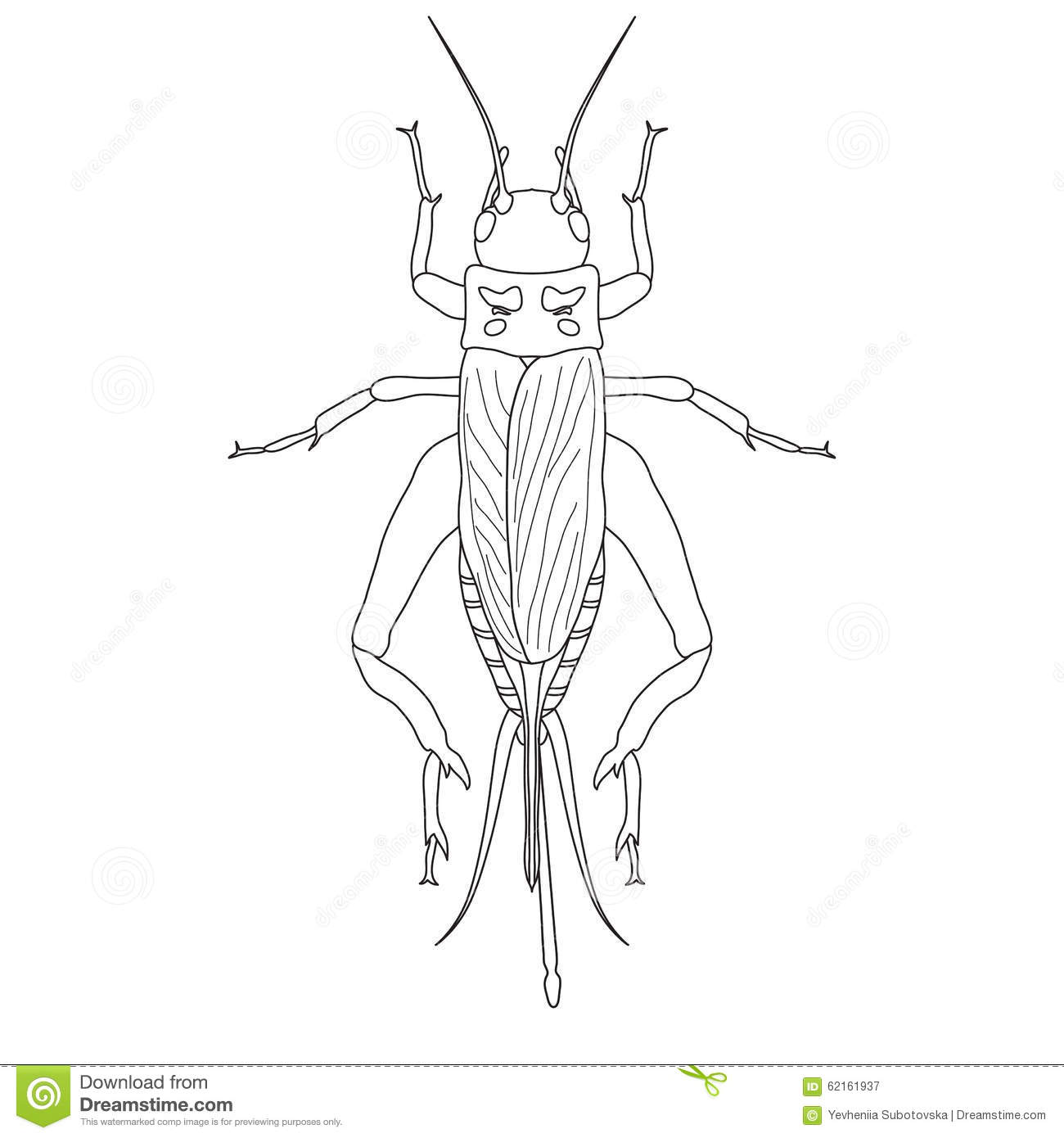 Cricket Insect Stock Illustrations.