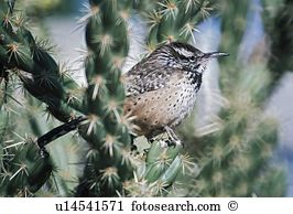 Wren Stock Photos and Images. 1,746 wren pictures and royalty free.