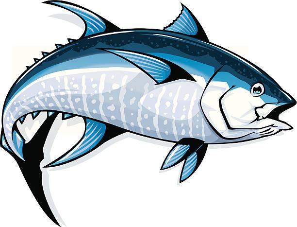 Best Bluefin Tuna Illustrations, Royalty.