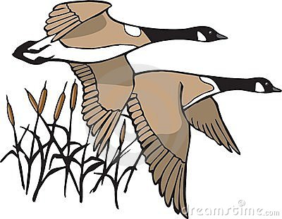 Geese clip art.