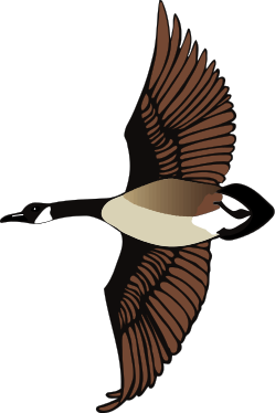 Canadian Goose Clipart.