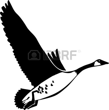 5,905 Goose Stock Illustrations, Cliparts And Royalty Free Goose.