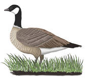 Wild geese clipart #19