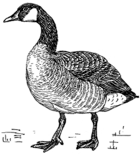 Canadian Geese Clip Art Download.