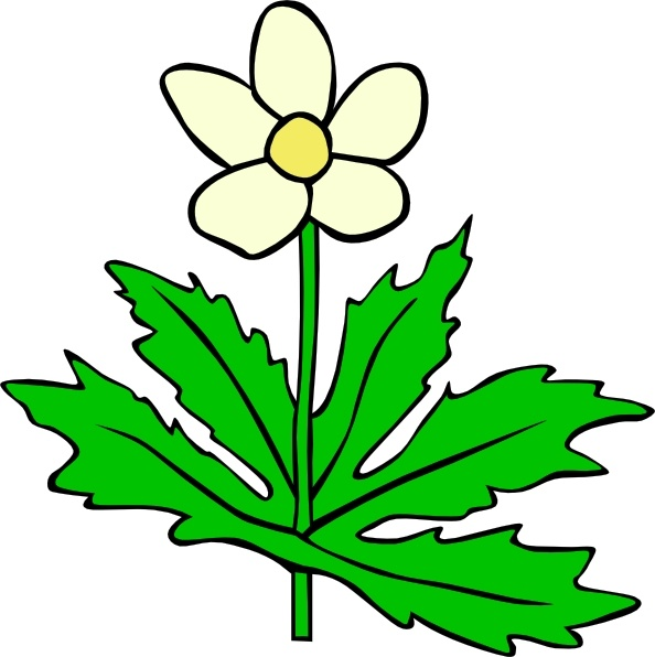 Anemone Canadensis Flower clip art Free vector in Open office.