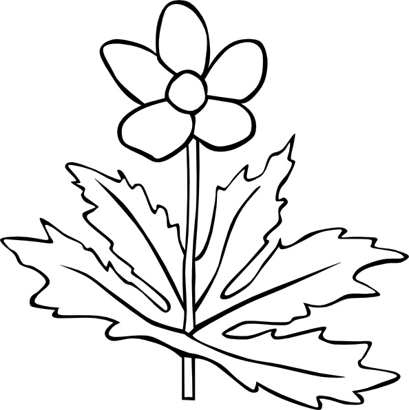 Gg Anemone Canadensis Outline clip art Free vector in Open office.